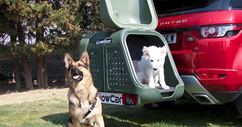 TOWBOX-DOG-2-(1)